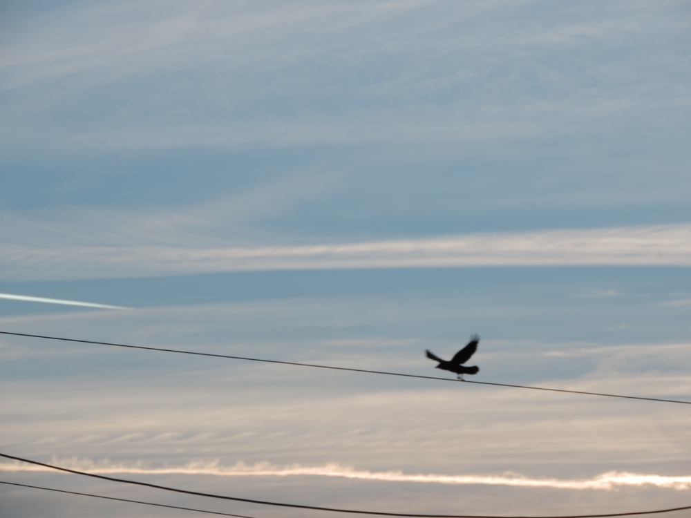 flying lines. early morning (2)