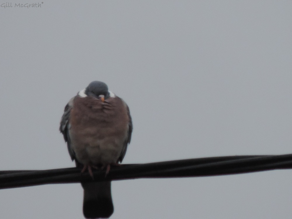 2014  03 27  cold bird jpg sig