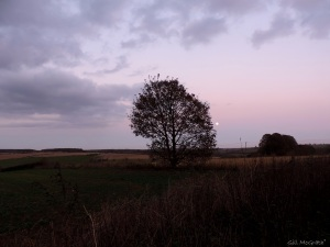 2014 11 05 purple moon norning  field evening jpg sig