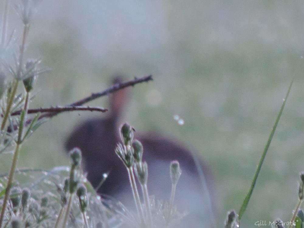 2014  05 28 Bunny Blur jpg sig