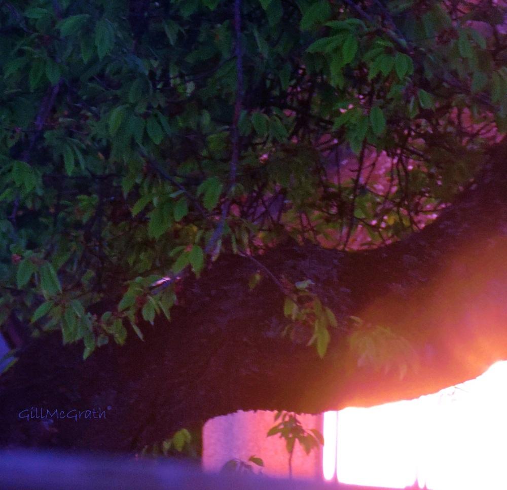2014 first call. last call. sun catching me  jpg sig