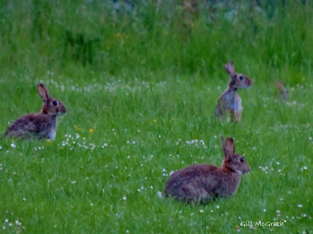 2014 06 02 A bunny arrangement jpg sig