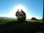 2014 06 08 Blinding sun jpg sig