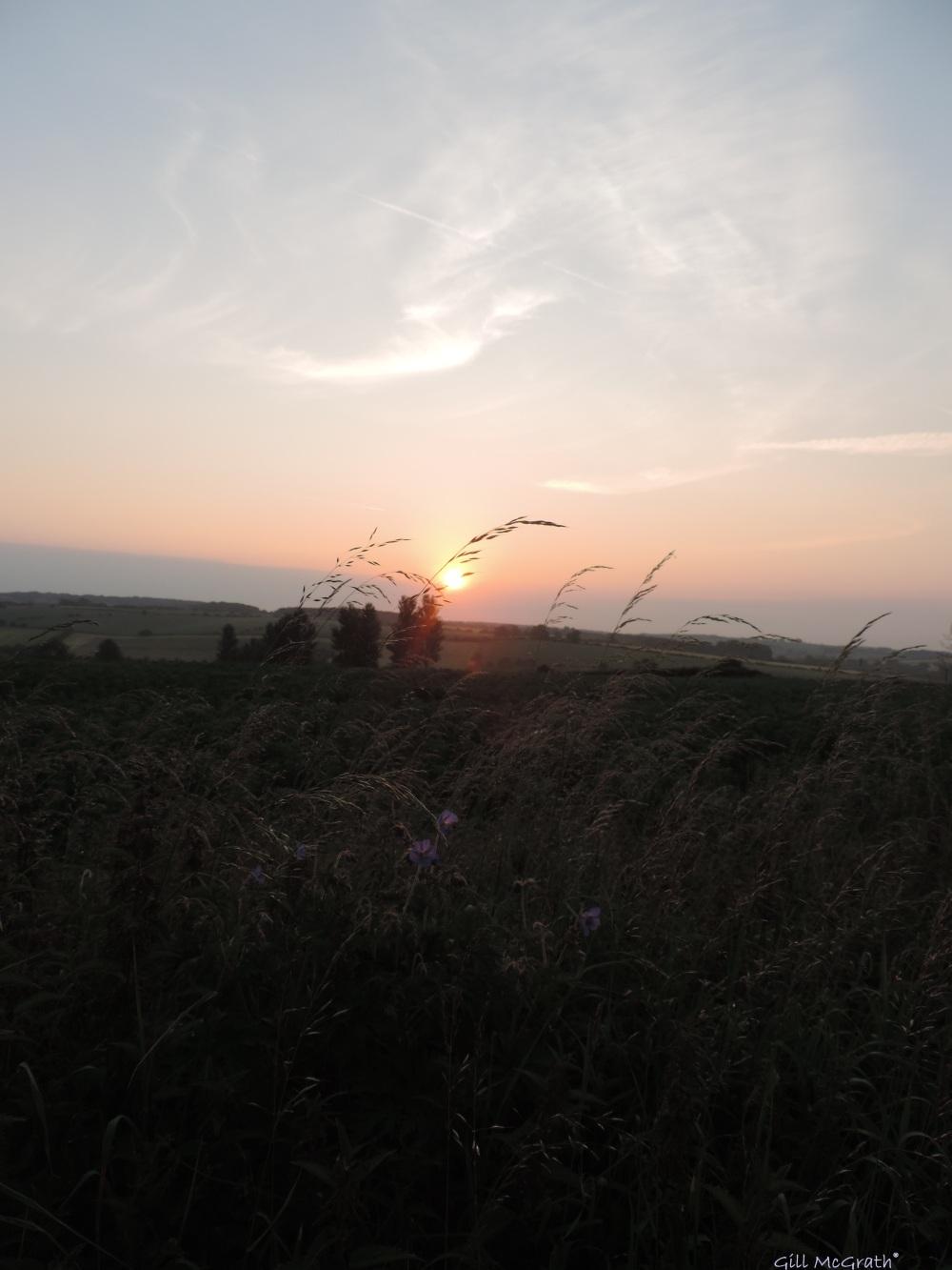 2014 06 22  5.20am Midsummer  purple jpg sig