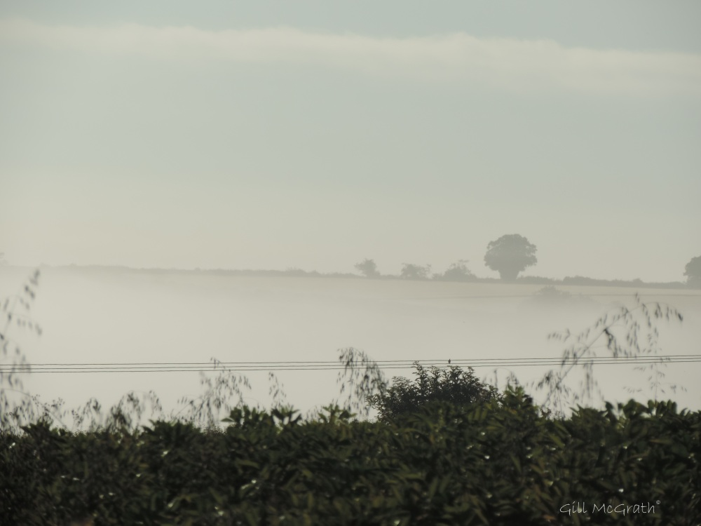 2014 07 17  early bird watching  new horizon appear in mist jpg sig
