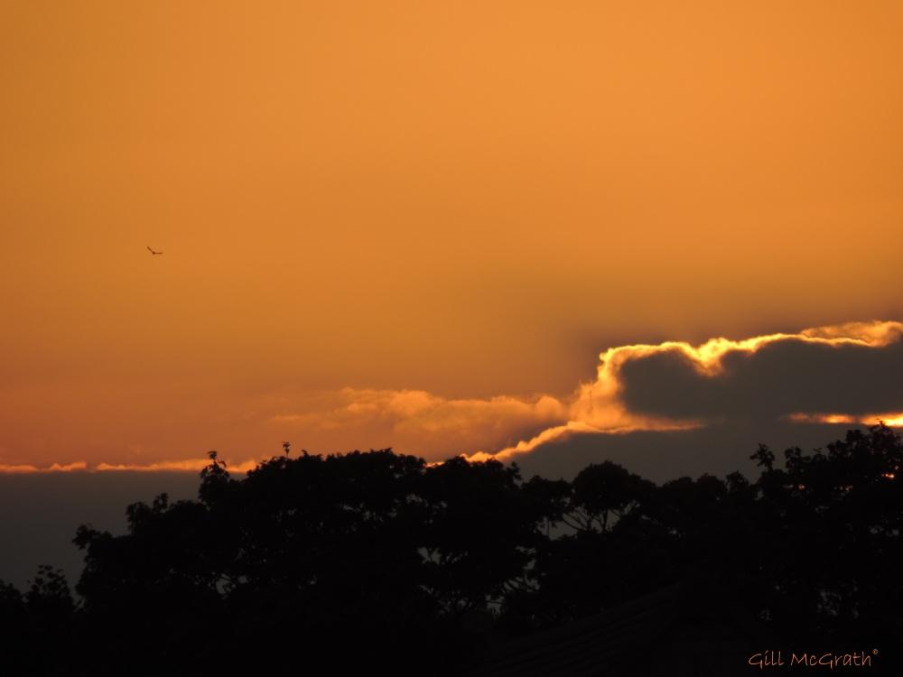 2014 09 02  sunglow birds watching jpg sig