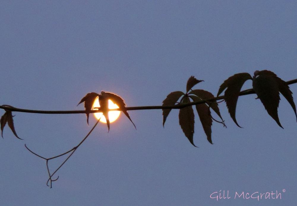 2014 09 07 Moon moppet lighting up jpg sig