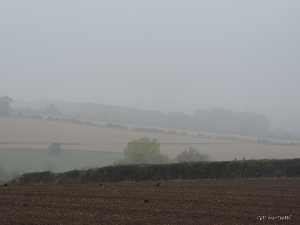 2014 09 15 mist beyond the hedge jpg sig