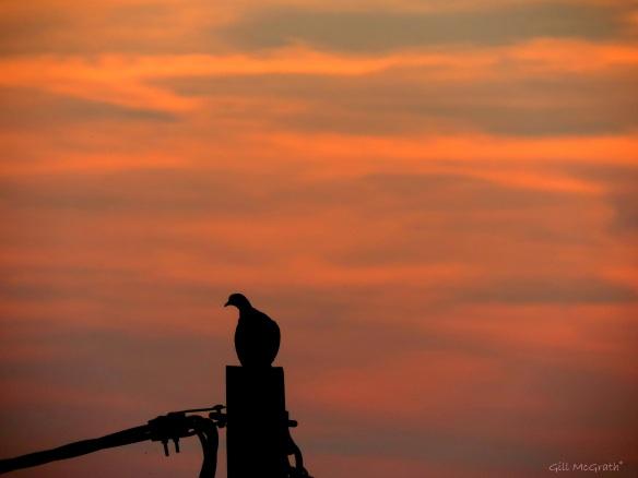 2014 09 16 Golden bird on the edge of  a sunset jpg sig