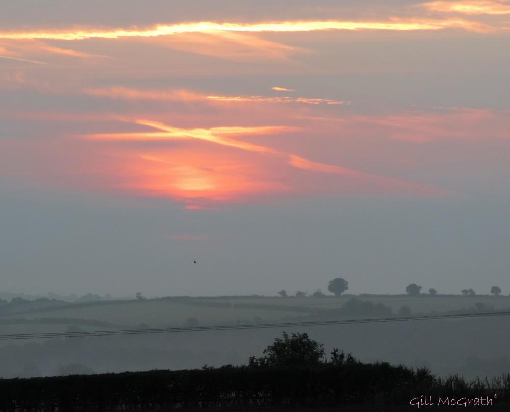 2014 09 22 dawn kiss. a bird. in a ploughed field jpg sig