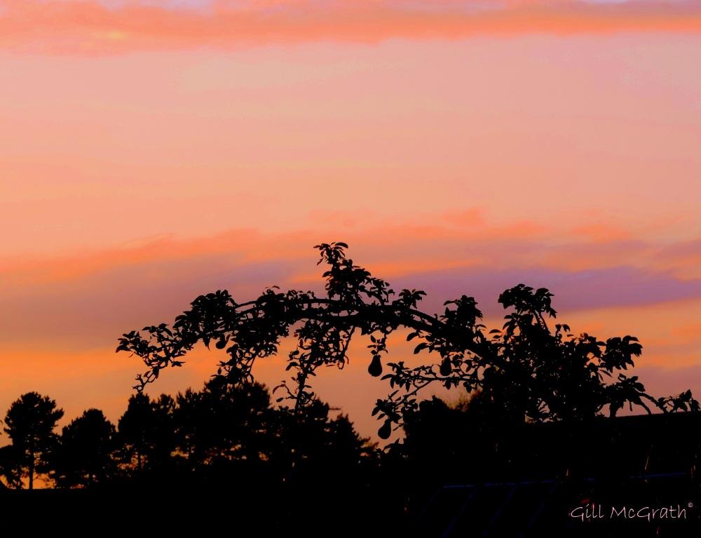 201409 08  three pears pink sunset jpg sig