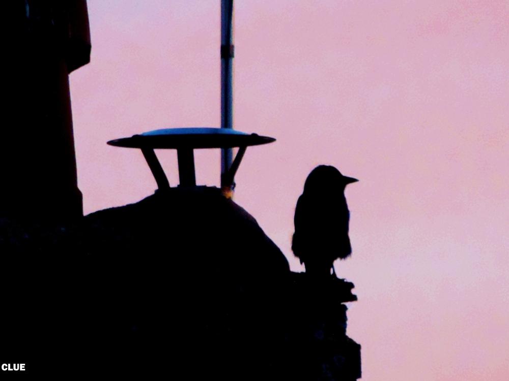 2014 01 10 bird clue jpg
