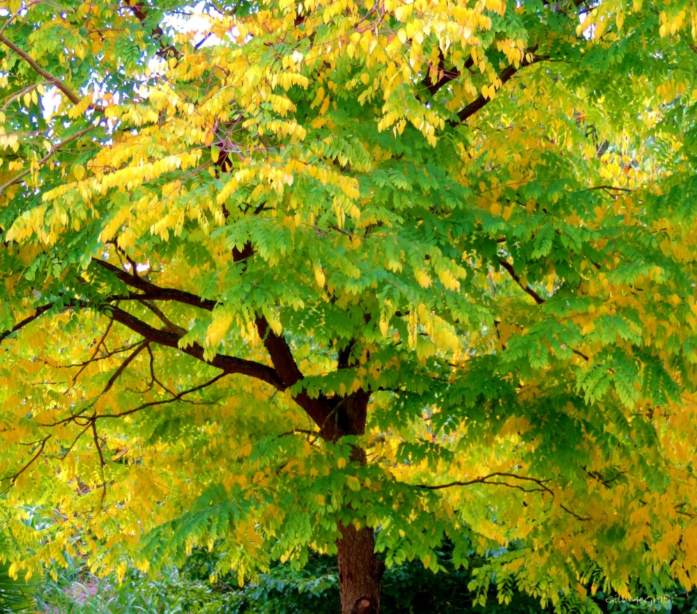 2014 10.02 under the tree jpg sig