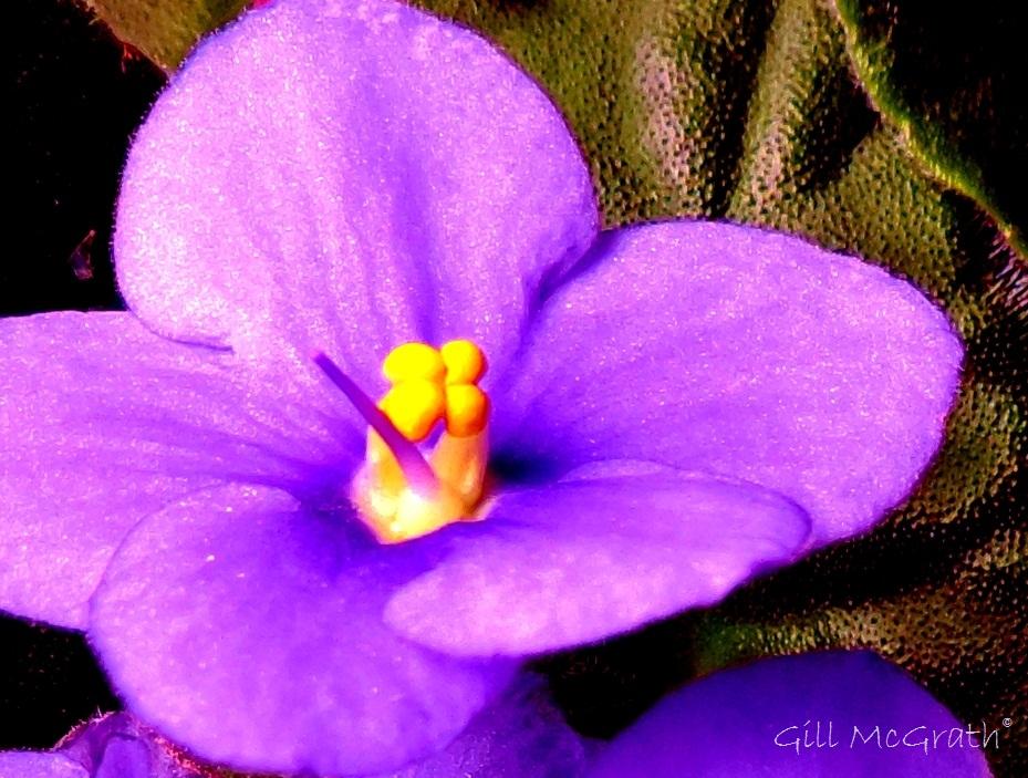 2014 10 09 violet jpg sig