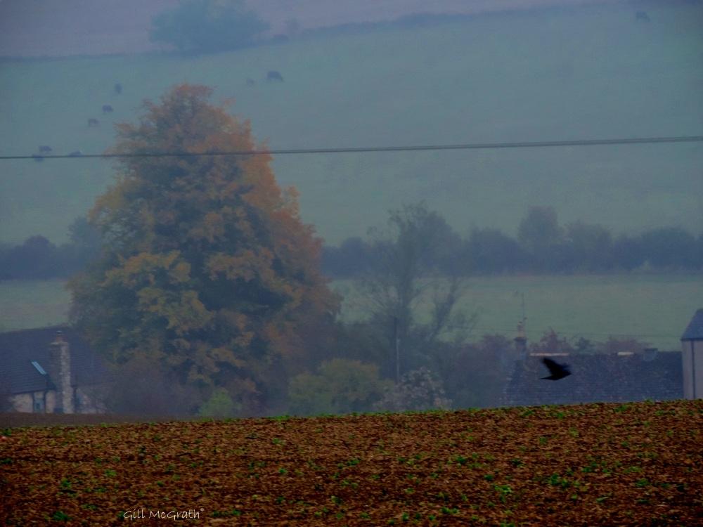 2014 10 15 cows fly in mist jpg sig