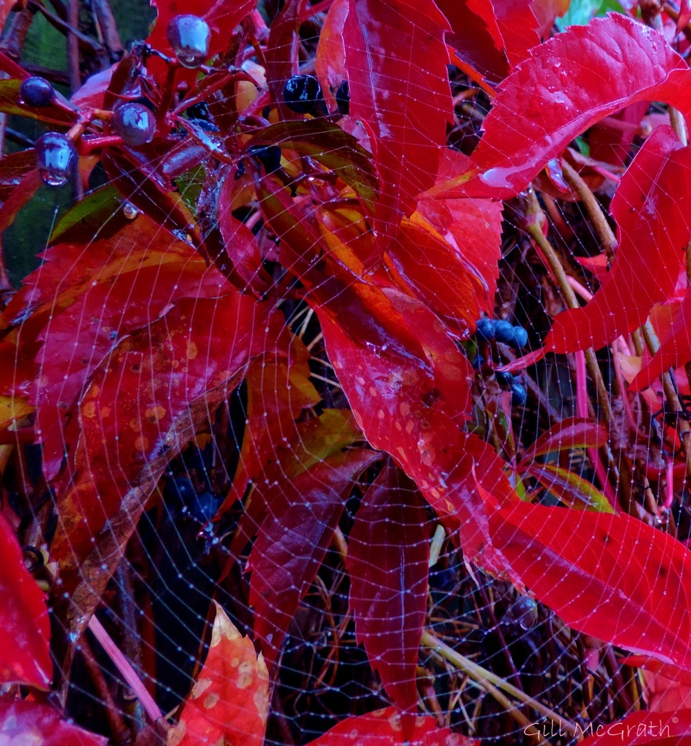2014 10 16 red hanging on fence gossamer wrapped jpd sig