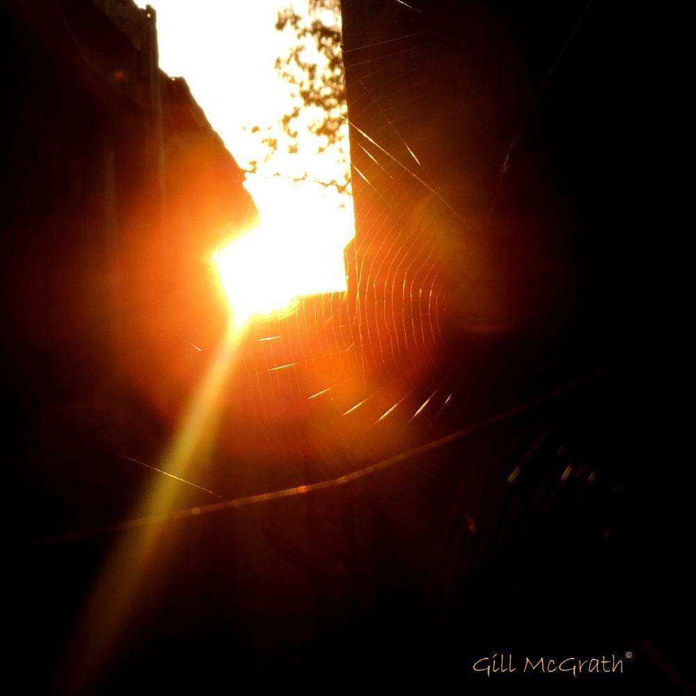 2014 10 22 behind the shed a cobweb  at 8 am jpg sig