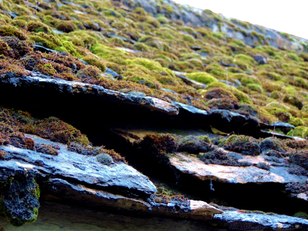 2014 19 19 moss on an old roof jpg sig