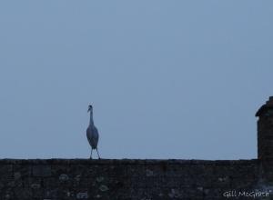 2014 11 02 Heron 2 jpeg sig