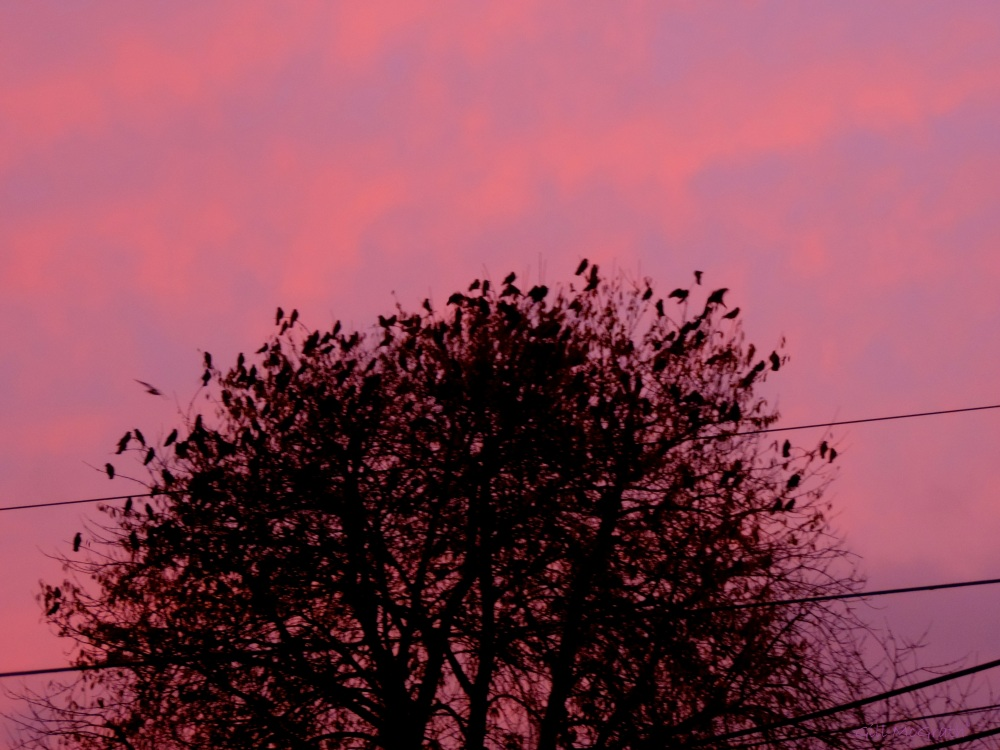 2014 11 13 birds and the tree jpg sig