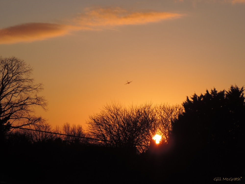2014 12 03 golden bird into the sunset jpg sig