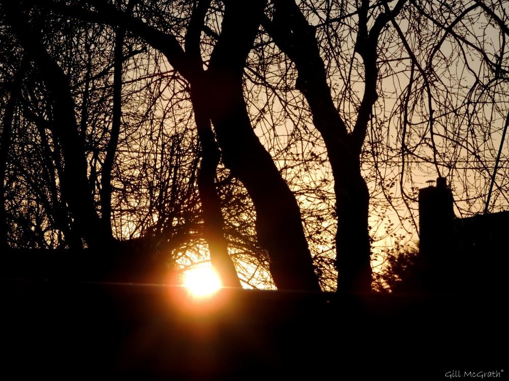 2014 12 03 sun on the fence jpg sig