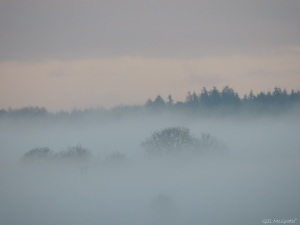 2014 12 16 Lavender Mist on the horizon jpg sig