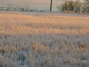 2014 12 18 Morning. soft landing place jpg sig