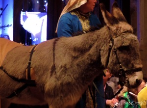 2014 12 22 donkey at the place where the  Church Bells ring jpg sig