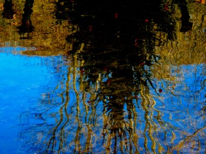 2014 12 27  daylight tree reflections lights off jpg sig