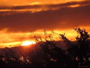2014 12 30  fire over the woodland edge 8.15 am jpg sig