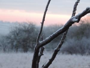 2014 12 30 frost. detail. jpg sig