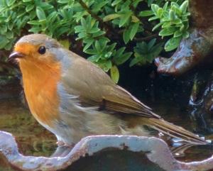 today. robin. in diamonds