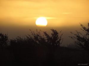 2015 01 04 sun up in a mist  8.35 am  jpg sig