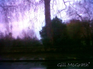 2015 01 09 trees in rain today jpg sig