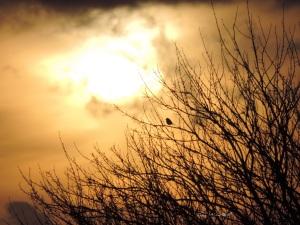 2015 01 10 robin looking at the sun jpg sig