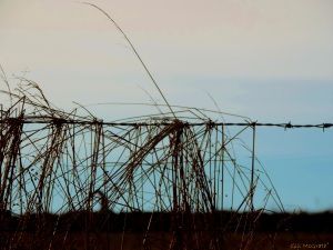 2015  01 14  caught in the barb on the line jpg sig