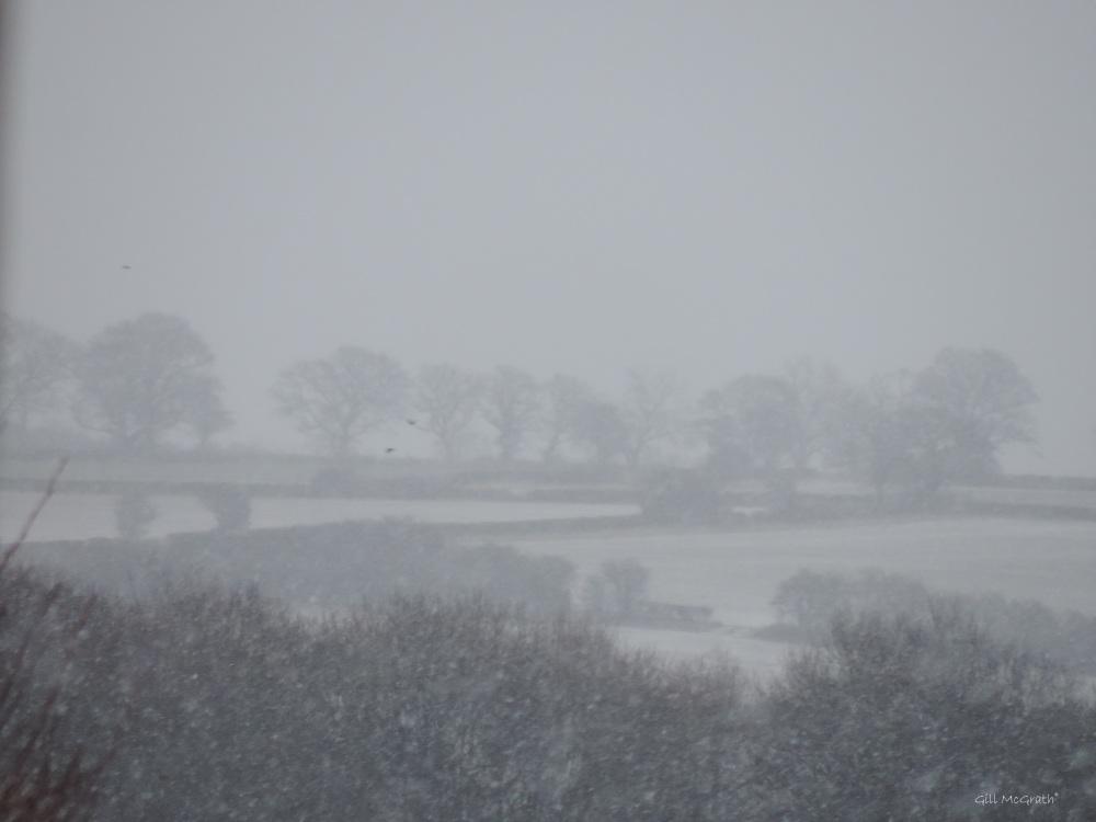 2015 01 17 Horizon in the snow 9 am jpg sig