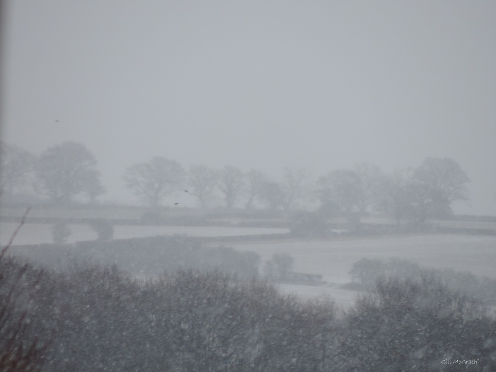 2015 01 17 Horizon in the snow 9 am jpg sig