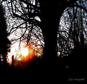 2015 01 19 woodland edge jpg sig