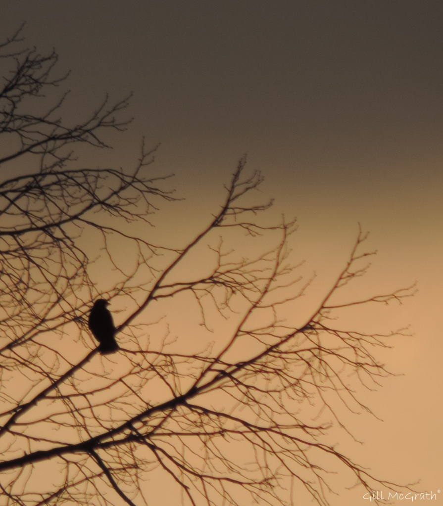 2015 01 22 sunset watching bird single jpg sig