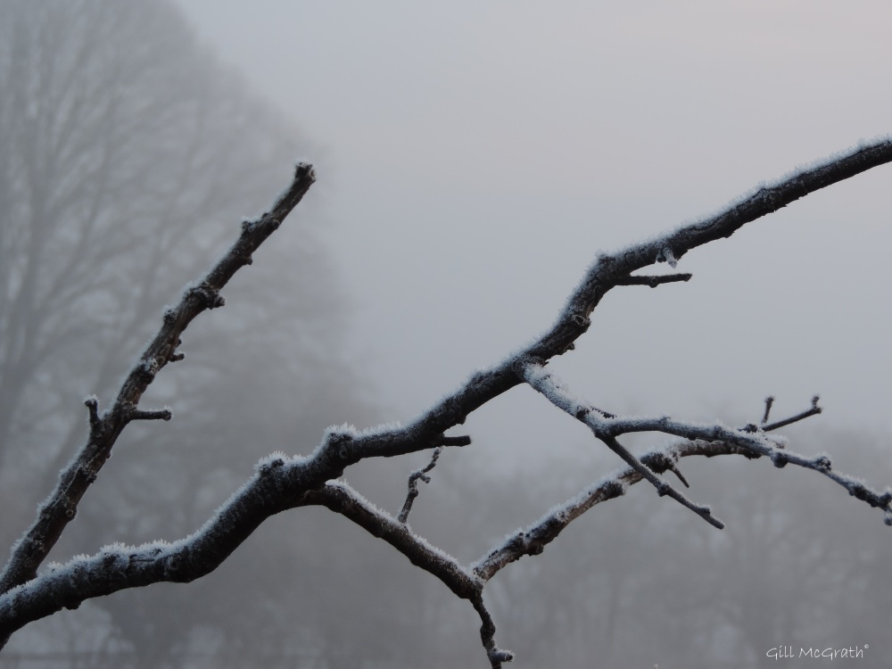 2015 01 23 clinging frost jpg sig