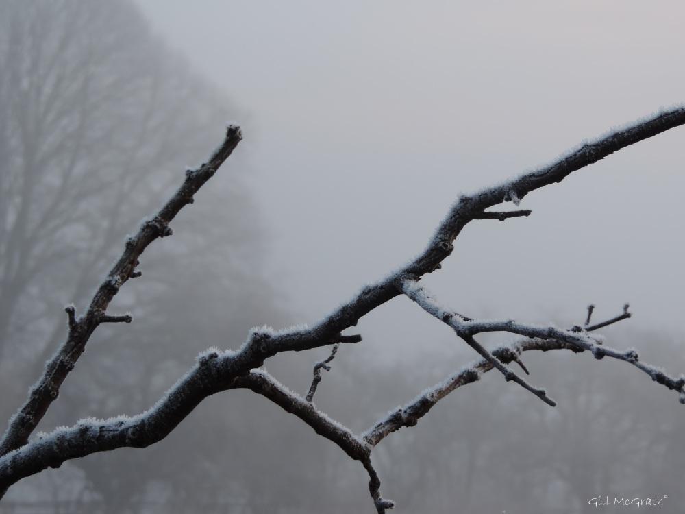 2015 01 23 clinging frost jpg sig