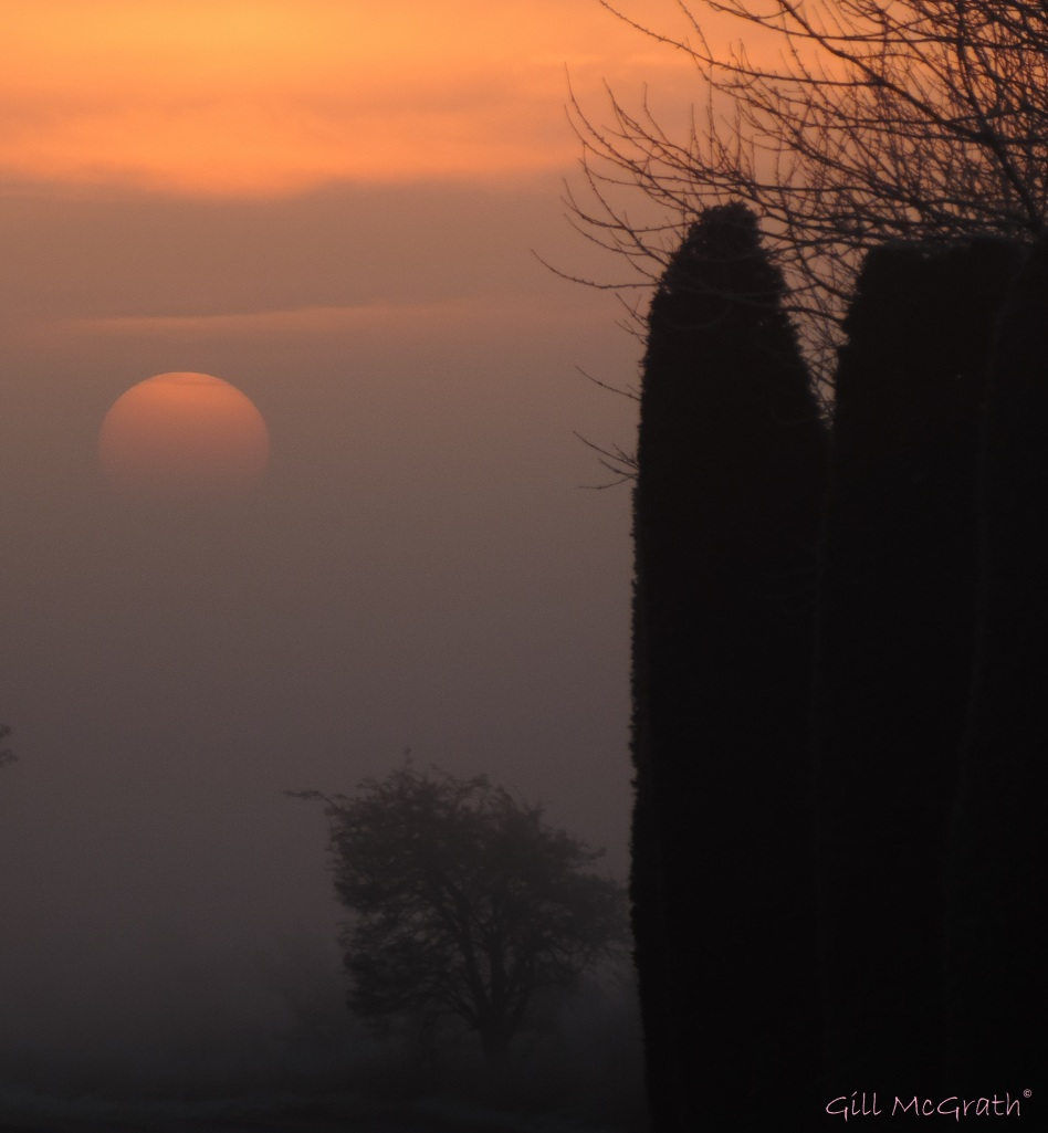 2015 01 23 sun up in mist  8.12 am jpg sig
