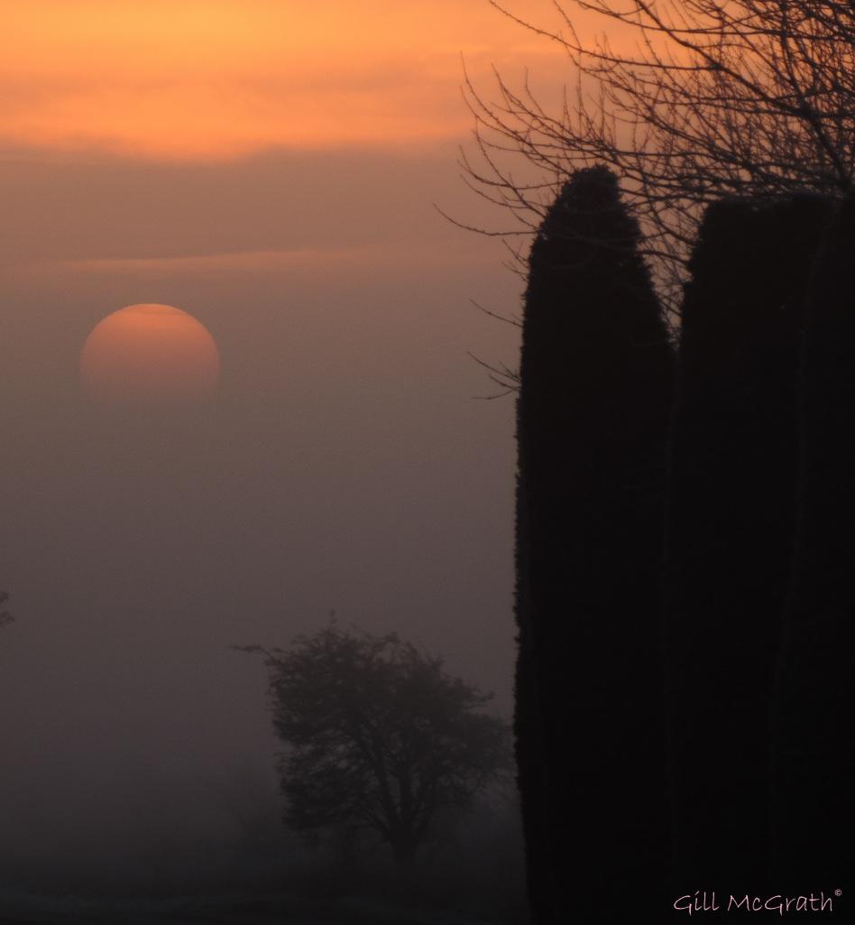 2015 01 23 sun up in mist  8.12 am jpg sig