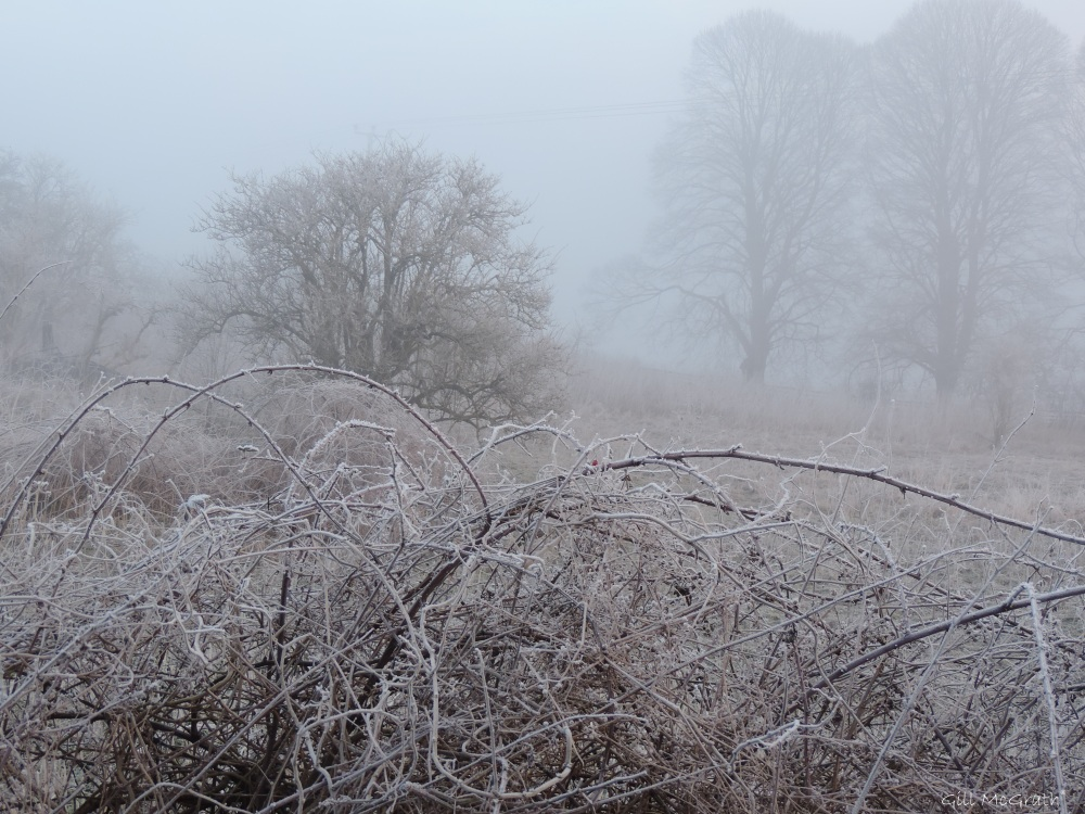 2015 01 23  trees  frost thorn jpg sig