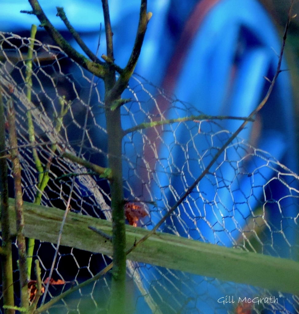 2015 01 26 caught on a wire jpg sig