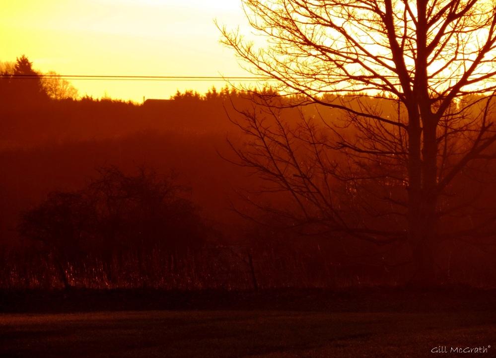 2015 02 02 sun rise field jpg sig