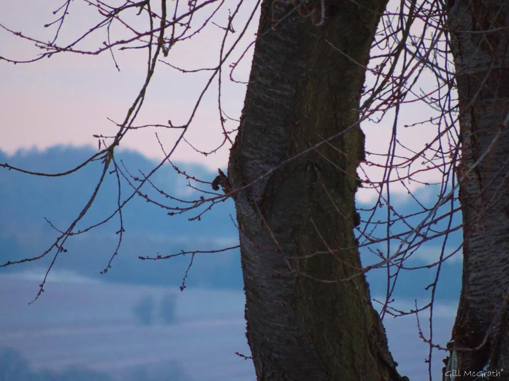 2015 02 03 tree in morning light jpg sig
