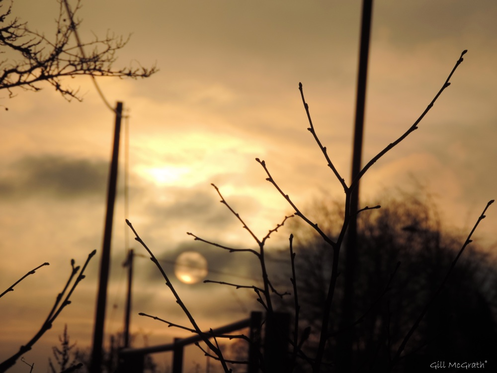 2015 02 04 road side sun morning 816 jpg sig